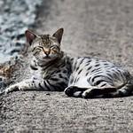 Cuando te despiertan de la #siesta en el momento en que estás más a gustito  #gatos #gatoscallejeros #cats #photocats #instacats #neko #meow #gatze #gatto #koshka #catsofworld #catsofinstagram #streetcats #chat #sleep thumbnail