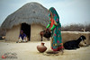 Colors of Thar (Iqbal.Khatri) Tags: travel thar traditional sindh pakistan photography iqbalkhatri calture