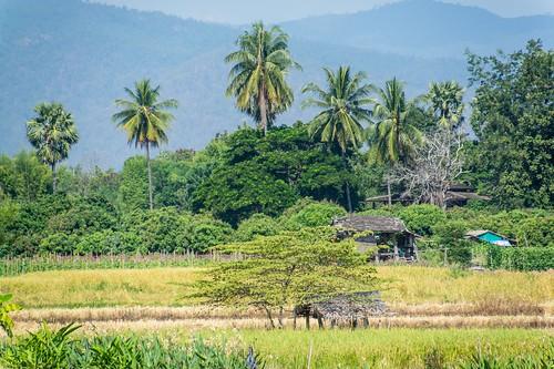 doi inthanon - thailande 34