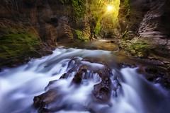 Canyon Flow (artjom83) Tags: 2015 nz newzealand island north ruakuri glow travel longexposure water stream downunder landscape serene sunstrar sunset sunrise nd filter polarizer nature caves waitomo light creek gorge autumn