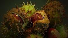 Bastelstunde (BeMo52) Tags: kastanie fruits aesculus rosskastanie baum tree früchte seifenbaumgewächse sapindaceae kapselfrüchte stacheln herbst autumn fall flora