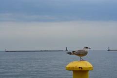 Port Gdynia (Andrea Kropka) Tags: gdynia polska poland trójmiasto morzebałtyckie bałtyk balticsea