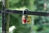 Heverlee - Love (bollejeanclaude) Tags: bibliothèque photos heverlee leuven voyages vlaanderen belgique be cadenas love pont nikoniste nikond5300 dijle dyle