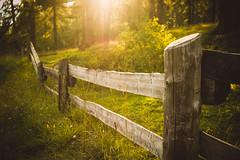 la calda  luce del tramonto... (clo dallas) Tags: bosco tramonto sunset wood nature trees rays raggi sole sunflare montagna mountain sony a6000