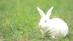 animals (Susie Cleveland) Tags: flickr red blue white green yellow pink orange blackandwhite rabbit