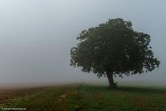 246/365 - Herbstnebel zieht über die Felder (J.Weyerhäuser) Tags: mainz laubenheimerhöhe spinnennetz nebel felder