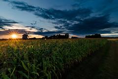 Aulakowszczyna droga i młyn (1 of 1) (Stach_Trach) Tags: sunset aulakowszczyzna windmill podlasie maize