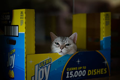 Cat in the box (h329) Tags: 75mm box f14 summilux cat leica m