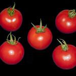 Five tomatoes thumbnail