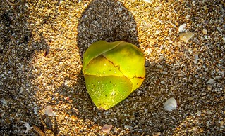 Green Heart in The Sand