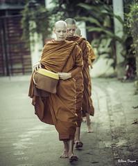 0S1A4821 (Steve Daggar) Tags: chiangmai thailand travel buddhist monk markets street candid asia