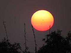 Sunset (Sadot Arefin) Tags: subset sun sundown silouette bangladesh burningsky sunet colorfulsunset purplesky skyonfire dinajpur parbotipur kholahati flickrunitedaward