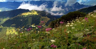 Magic of mountain wildflowers on the height of the eagle's flight