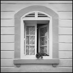 chill cat (Lukas_R.) Tags: leica q typ116 28mm f17 travel chill cat bw malta valletta europa window architektur