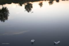 levedad (joseluisggzz) Tags: afz atardecer sunset agua water zaragoza joseluismorte joseluisggzz nikond750 sigma3514