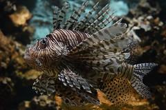 @ Artis 30-10-2016 (Maxime de Boer) Tags: fish vis natura artis magistra zoo amsterdam animals dieren dierentuin gods creation schepping