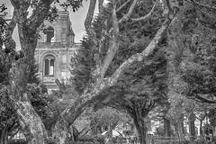 The Cathedral Among The Trees (Cuenca, Azuay, Ecuador. Gustavo Thomas © 2017) (Gustavo Thomas) Tags: catedral cathedral neorenaissance architecture mono monoart buildings follaje arboles trees monochrome blackandwhite blancoynegro bnw cuenca azuay ecuador sudamérica southamerica travel centro