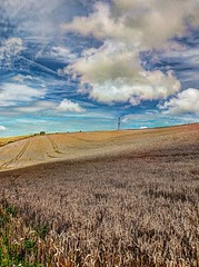 TheTransmitterHasTheRightName - Copy (iankellybn26dj) Tags: sussex england brighton downs falmer woodingdean landscape light summer uk photo