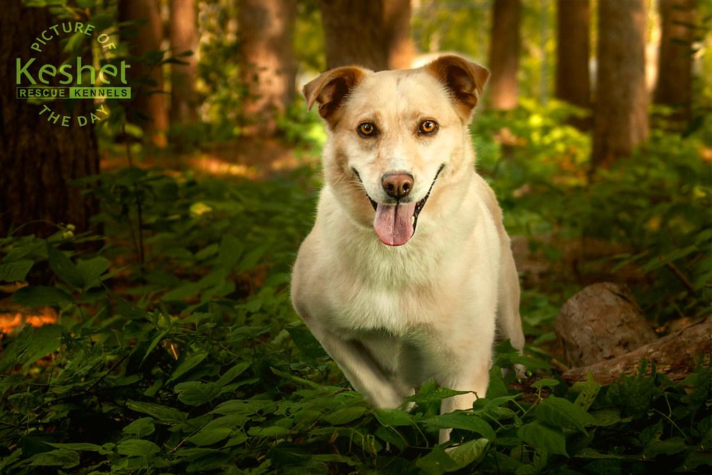 Dog Kennels Lanarkshire