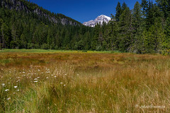 Mt. Rainier (John H Bowman) Tags: washington piercecounty parks nationalparks nps mtrainiernp mtrainier mountains meadows historic nrhp nationalhistoriclandmark blueskies august2017 august 2017 canon24704l