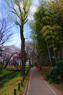 春の次大夫堀公園