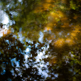 Trees In Water 118