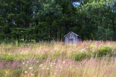 Sommarmorgon (Explore 2017-08-27) (nillamaria) Tags: fotosondag sommarmorgon fs170827 summermorning sverige sweden