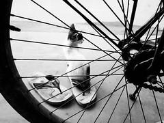 Candid Cat (Chiradeep.) Tags: cat animal cycle streetphotography blackandwhite blacknwhite blackwhite bw bnw monochrome monotone slippers kitten candid huawei honor5c smartphonephotography mobilephotography androidphotography pet