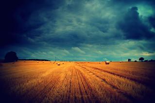 harvest time (Saxony, Germany)