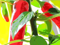 Chilli Fajita's - home grown (fstop186) Tags: chilli fajita pepper red green plant nature homegrown art abstract graphic painterly olympused60mmf28macro olympusem1