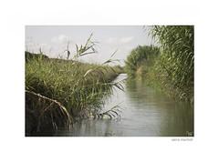 regadío y cañas (saoret58) Tags: verano agua acequia
