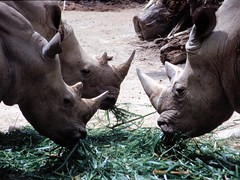 1994_Singapore_2016-07-18_Photo_285 (Matthias & Paula) Tags: singapore sentosa kuala lumpur malaysia cameron highlands zoo japanese gardens