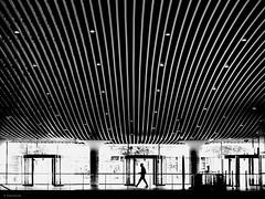 hurry up! (René Mollet) Tags: station mainstation delft man street streetphotography silhouette streetart renémollet move backlight bahnhof hurry