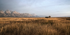 september wind (laura's POV) Tags: nature west western wyoming jacksonhole gtnp grandtetonnationalpark nationalpark mountains tetons autumn fall gold grass barn sky open september grosventre landscape isolated unitedstates lauraspov lauraspointofview prairie valley mormonrow