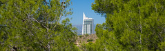 Benidorm. 2017. September. (CWhatPhotos) Tags: cwhatphotos trees tree hotel white tallest tall between olympus four thirds 43 omd em10 ii digital camera photographs photograph pics pictures pic picture image images foto fotos photography artistic that have which with contain artistc benidorm beach seaside resort spain costa blanca spanish fun hol holiday september 2017