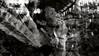 27/03/2017 Resistência – A arte, entre Luz e sombras e o povo Xirixana (ASSOCIAÇÃO RORAIMENSE DE FOTOGRAFIA) Tags: brasil terra indígena yanomami brazil indigenous indígenas roraima amazônia amazonnatureza qualidade de vida xirixanas índios monte extremo norte caburai selva boa vista preservar ambiental silvestre animais fauna flora papagaios aves observação arte passarinhar birdwatching