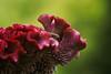 Deep Cut Gardens_579 (samramahmoud) Tags: sony sonnart18135 ziss macro outdoor