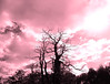 Just pink (François Tomasi) Tags: arbres arbre trees tree color couleur rose pink sky ciel clouds cloud nuages nuage branches branche pointdevue pointofview pov lights light lumière reflex nikon yahoo google flickr françoistomasi campagne nature digital numérique photo photographie photography photoshop traitement filtre indreetloire touraine france europe août 2017