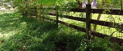 Fenced Friday: On the shady side (Hayseed52) Tags: fencedfriday fence blackboard americanwire sunny shady summer