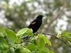 Rio Sarapiqui_44 (Thomas Jundt + CV) Tags: costarica heredia riosanjuan trinidad