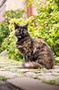 IMGP0772 (fLobOOk) Tags: cordes sur ciel cordessurciel aveyron tarn village médiéval histoire chien chat france europe garonne tarnetgaronne