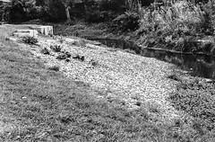 "Kleiner Fluss...-Little River-B&W (Siggi-Dee) Tags: ""leica elmar 50mm f28 35mm b26w blackandwhite color digital film japan kodak leica leicam6 leicam9 leicamp m9 tokyo voigtlander street rangefinder leicam5 wetzlar solms"