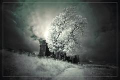 2017 07 23 Balvaird Castle 720nm - 56 (Mister-Mastro) Tags: 720nm balvairdcastle infrared ir schottland tree baum arbre castello schloss ruin ruine abandoned