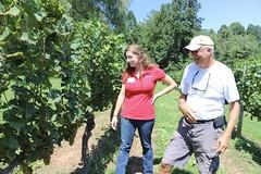 File374 (UGA CAES/Extension) Tags: grapes ugaextension cranecreekvineyards wine viticultureteam viticulture northgeorgiavineyards vineyards vines georgiawine uga