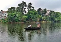 The Boat man in heavy rain (A Hil Galib) Tags: boat rain lake greennature landscape peopleinrain