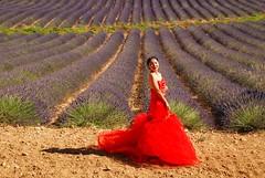 Jeune mariée dans la lavande (sami 51) Tags: fleurs lavande exterieur valensole jeune fille champ nikon france alpesdehauteprovence