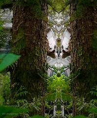 """So, this is the crystal ballroom"" (evakongshavn) Tags: 7dwf fauna squirrel garden animal wildanimals animals creative created create fineartphotography artistic eventyr fairytale"