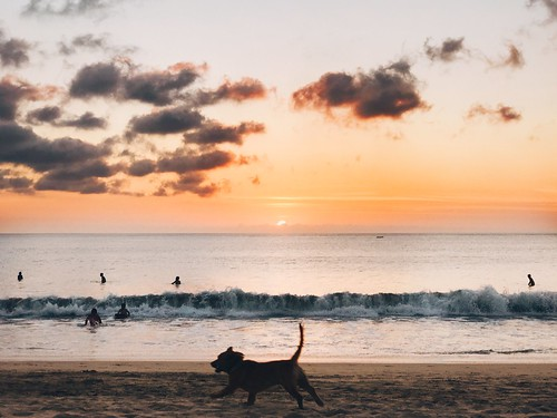 Relaxing in the sunset Sunset Sea Beach Silhouette Beauty In Nature Horizon Over Water Nature Sky Water Animal Themes Scenics Pets Domestic Animals Dog Tranquil Scene One Animal Sand Tranquility Mammal Outdoors at Jimbaran Beach (Pantai Kedonganan)
