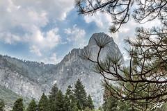 Mountain Pine (kschmitz2) Tags: california canoneos5dmk3 tree cloud mountain national sky park yosemite ef2470mmf28lii pine clouds yosemitevalley unitedstates us