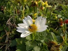 2017-08-22-10388 (vale 83) Tags: flower nokia n8 friends coloursplosion colourartaward flickrcolour autofocus beautifulexpression